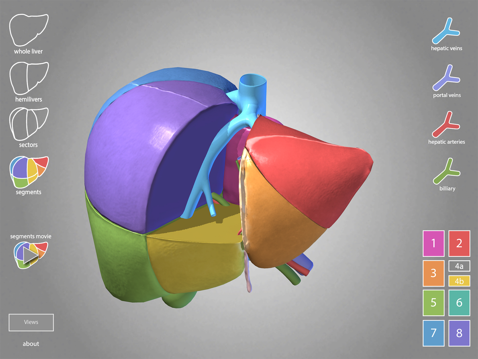 Surgical Anatomy of the Liver