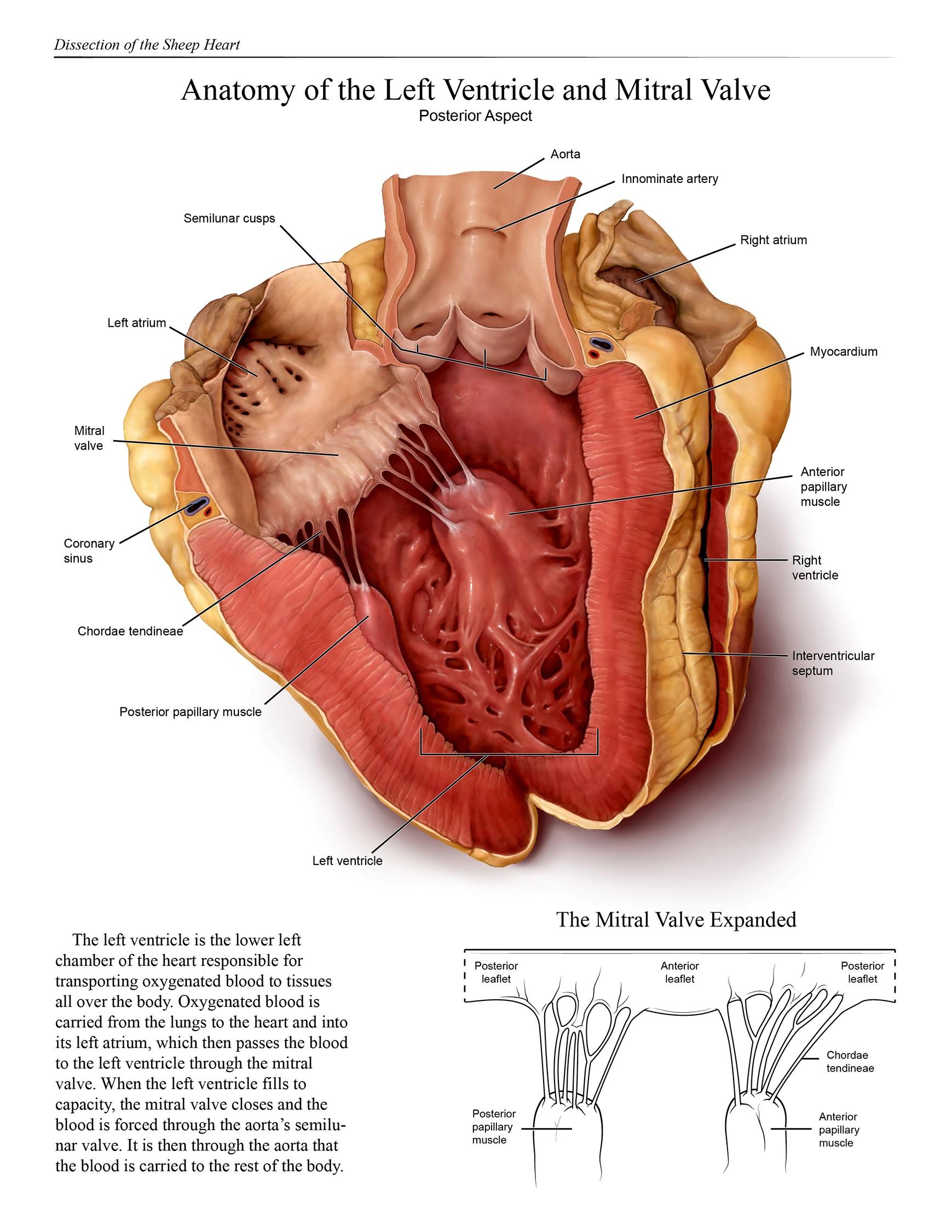 2016 Salon Winners - Association of Medical Illustrators