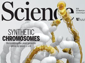 Synthetic Chromosomes