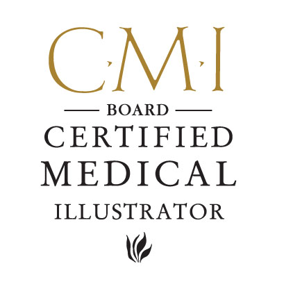 Board Certification - Association of Medical Illustrators