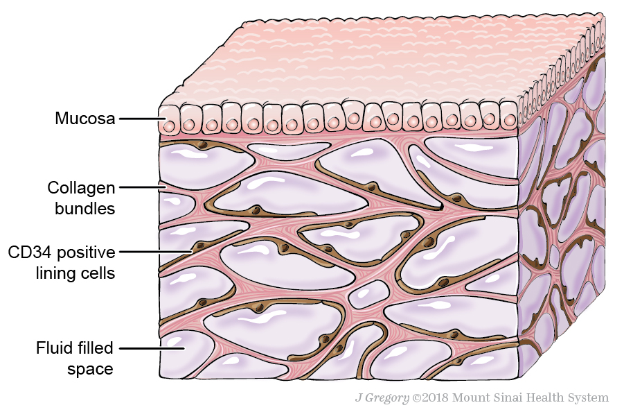Illustration of the interstitium in a tissue block.