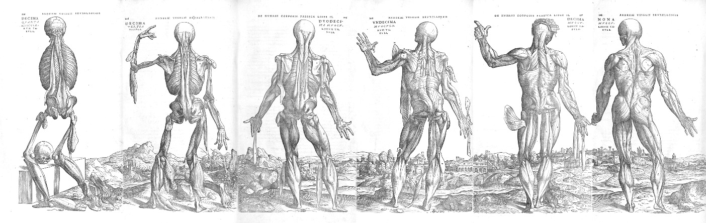 Vesalius muscle men landscape