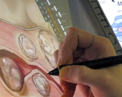 Image of medical illustrator painting